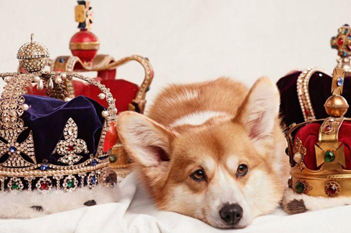 Расследование ФБК о перелетах собак жены вице-премьера Игоря Шувалова