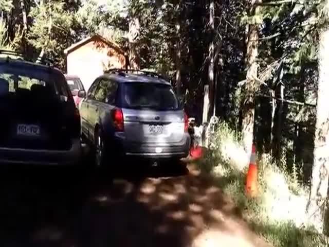 Спасение заблокировавшегося в автомобиле медвежонка