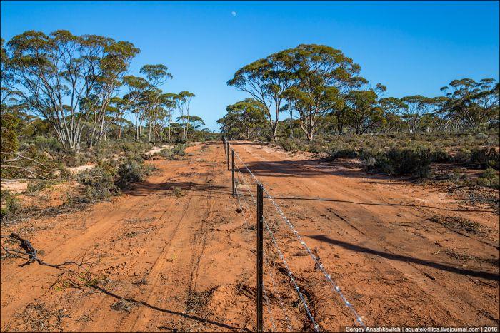 Гигантские заборы австралийцев (6 фото)