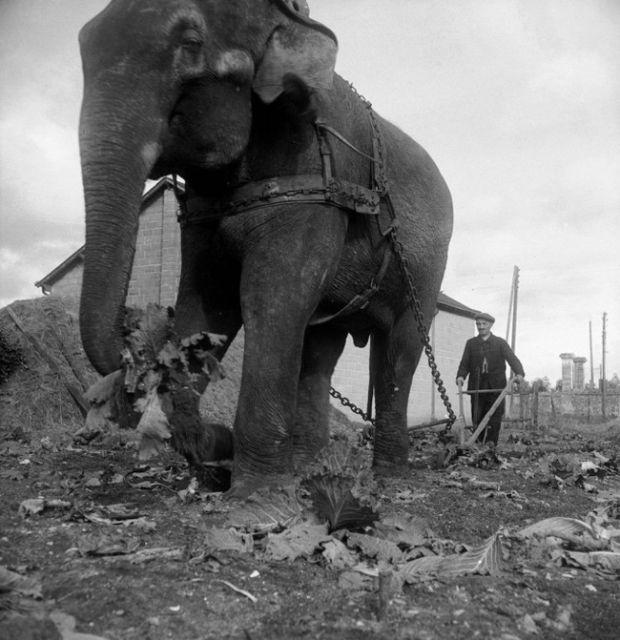 Подборка редких фотографий со всего мира. Часть 68 (30 фото)