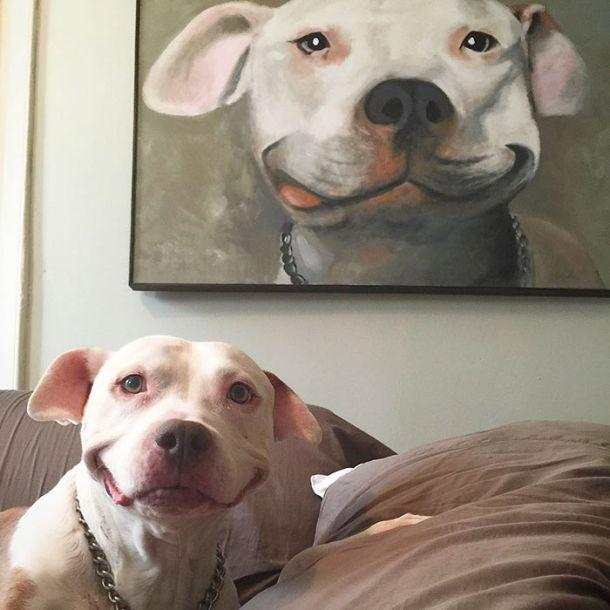 Питбуль, который всегда улыбается (8 фото)