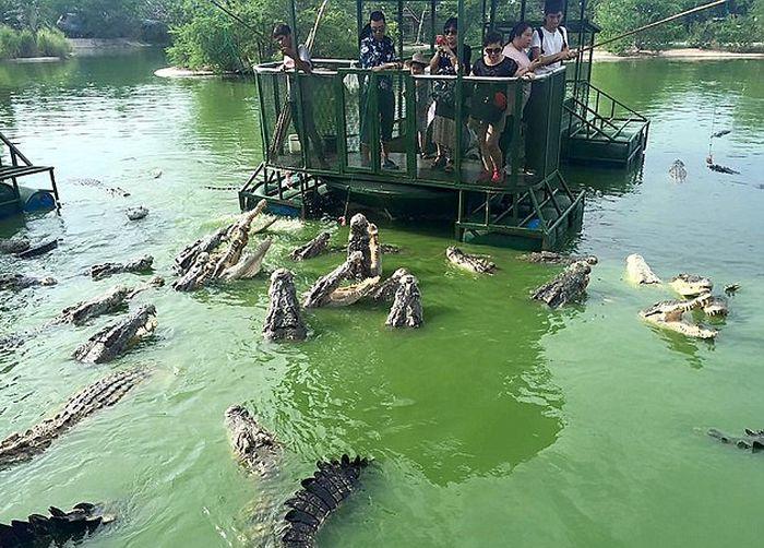 Аттракцион для любителей крокодилов в Таиланде (6 фото)