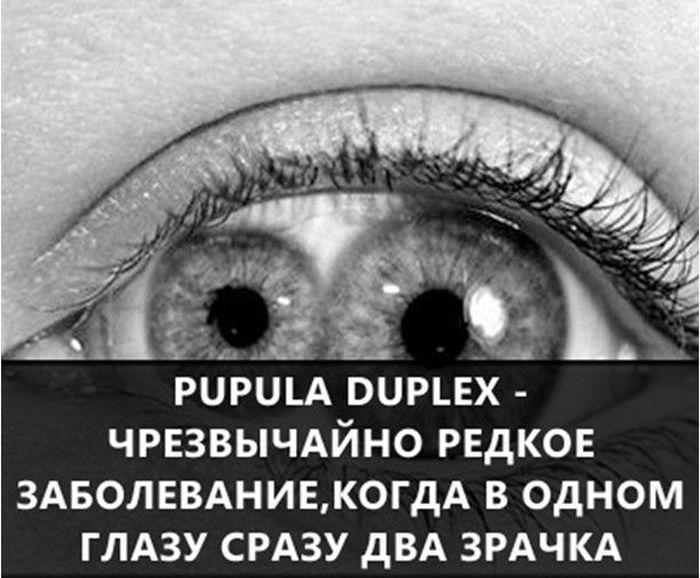 https://cdn.trinixy.ru/pics5/20160719/interesnie_fakti_03.jpg