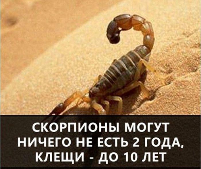 https://cdn.trinixy.ru/pics5/20160719/interesnie_fakti_05.jpg