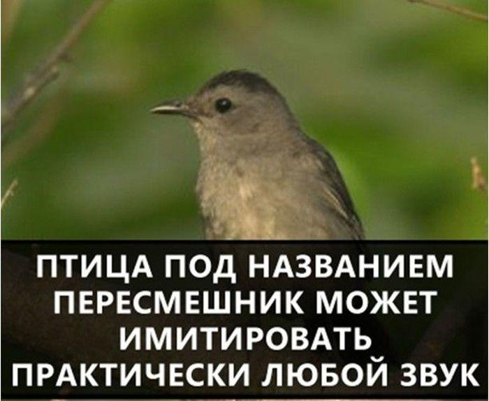 https://cdn.trinixy.ru/pics5/20160719/interesnie_fakti_07.jpg