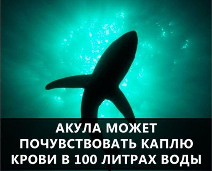 https://cdn.trinixy.ru/pics5/20160719/interesnie_fakti_10.jpg