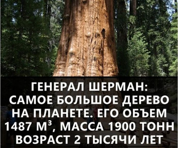https://cdn.trinixy.ru/pics5/20160719/interesnie_fakti_20.jpg