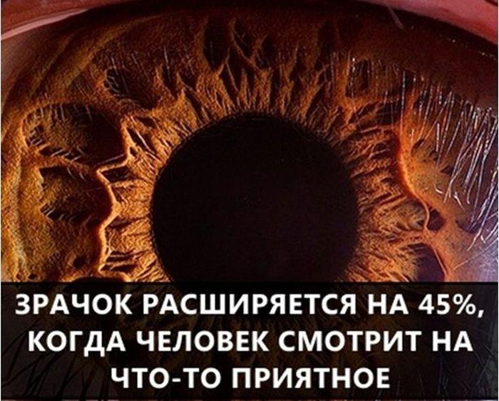 Познавательные факты обо всем на свете (55 картинок)