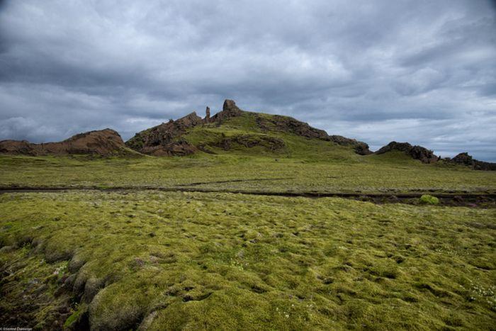 Удивительный исландский мох (6 фото)