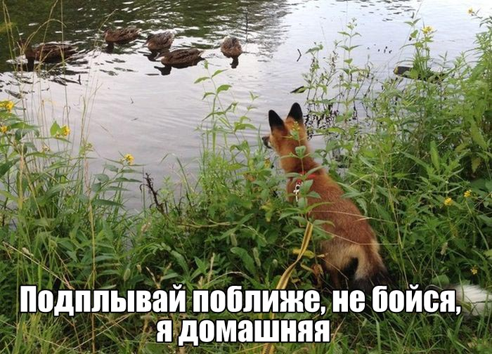 http://trinixy.ru/pics5/20160721/podborka_vecher_01.jpg
