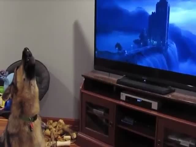 Пес подыгрывает героям мультфильма «Зверополис»