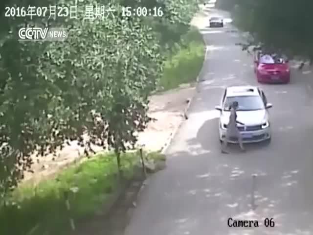 В китайском парке дикой природы тигр напал на женщину