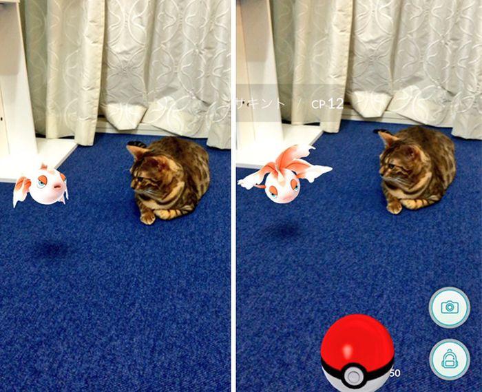 Домашние животные знакомятся с покемонами (15 фото)