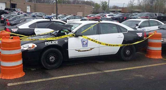 Добрые полицейские помогли птицам, свившим гнездо на капоте служебного автомобиля (3 фото)
