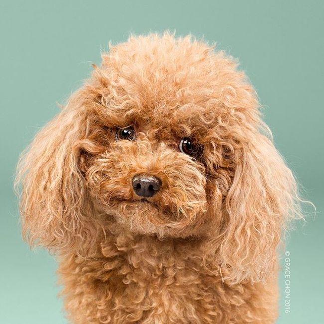 Собаки до и после стрижки (16 фото)