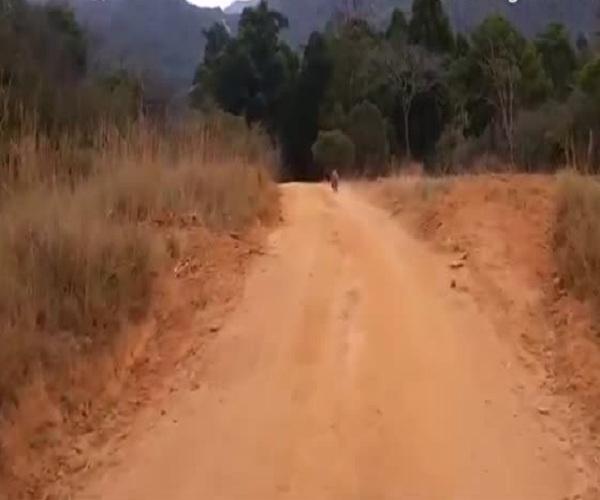 Прогулка с детенышем носорога