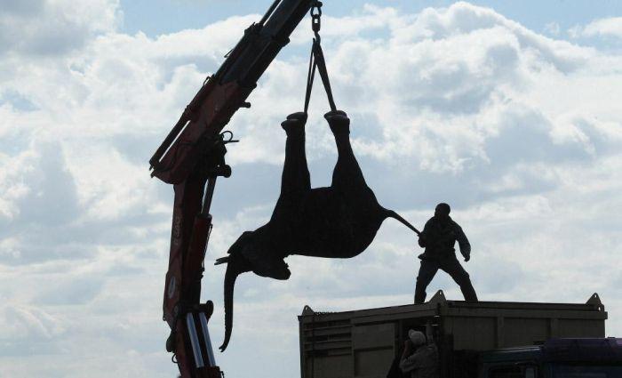 Особенности перевозки слонов (13 фото)