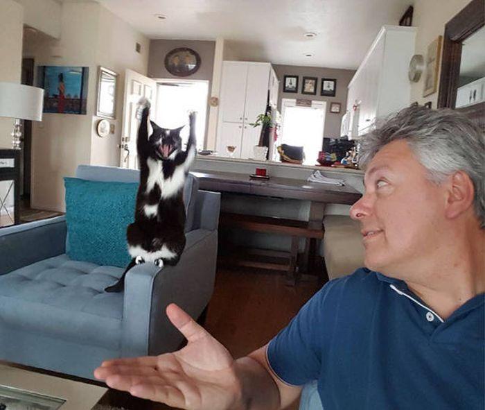 Кошка, которая всегда сдается (12 фото)