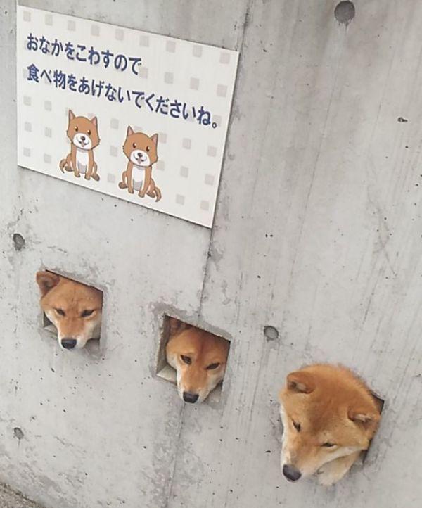 Любопытные собаки (3 фото)