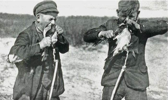 Как ловили ворон на Куршской косе (9 фото)
