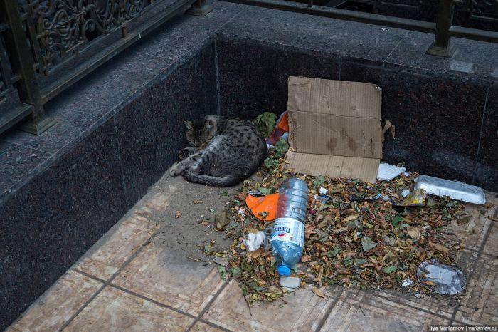 Махачкала – мусорная столица России (47 фото)