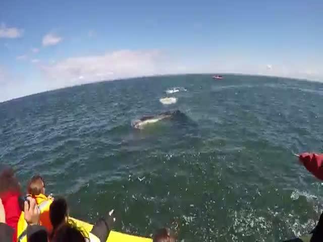 Кит проплыл под лодкой с туристами