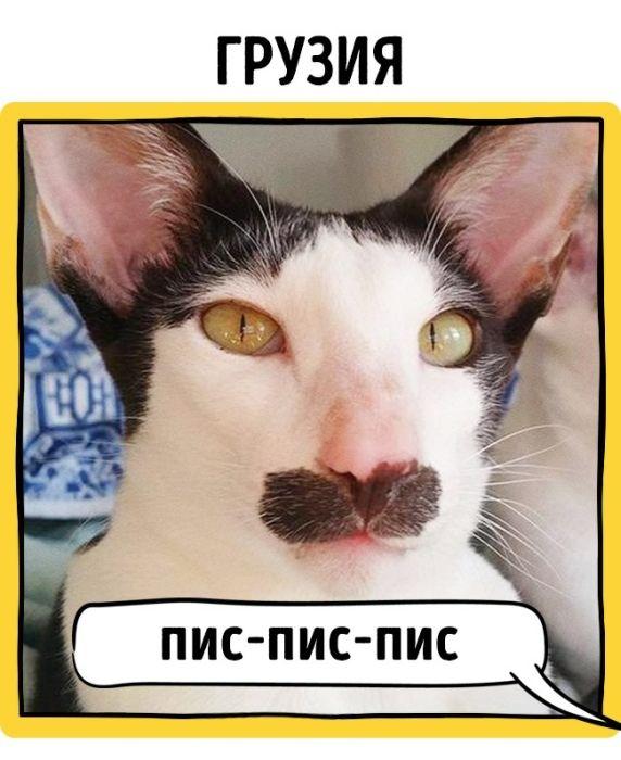 Как подзывают кошек жители разных стран (17 фото)