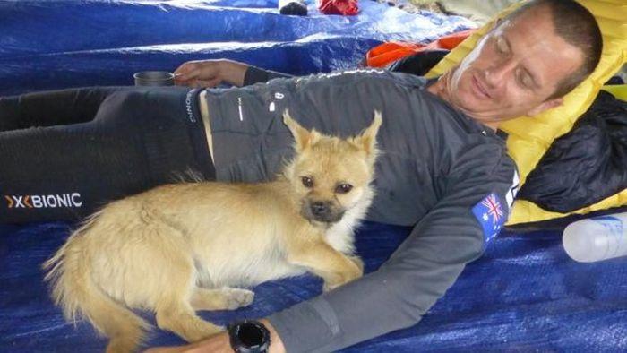 Бродячая собака поучаствовала в марафоне (4 фото)