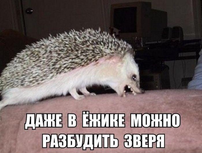 http://trinixy.ru/pics5/20160805/podborka_dnevnya_06.jpg