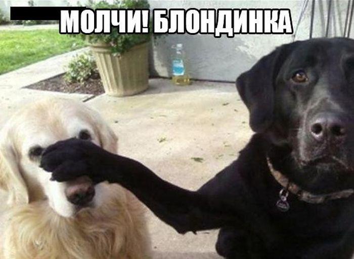 http://trinixy.ru/pics5/20160805/podborka_dnevnya_24.jpg