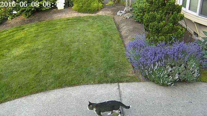 Нейросеть легла в основу устройства, позволяющего прогонять кошек с лужайки (4 фото)