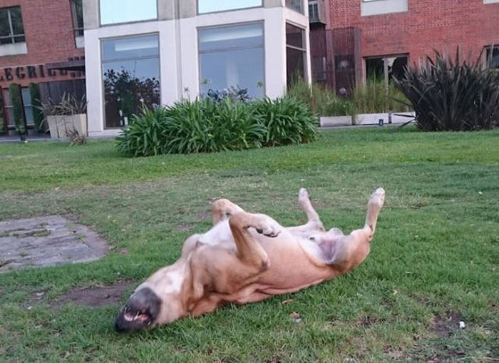 Стюардесса из Германии забрала бездомного пса, который полгода ждал ее у отеля (10 фото)