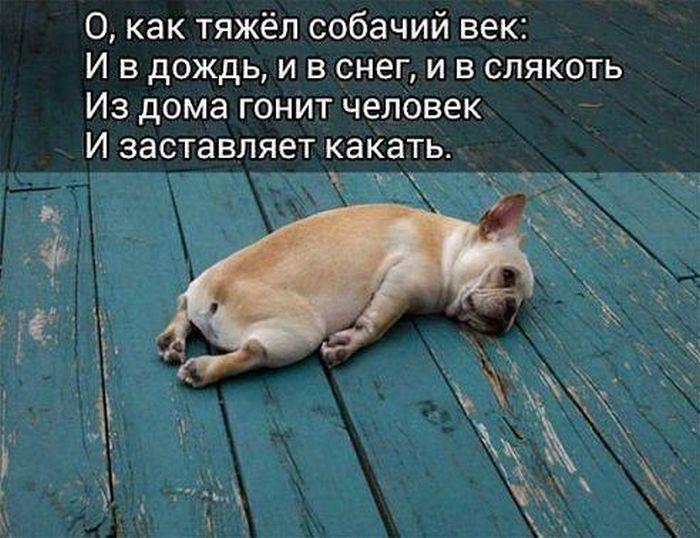 http://trinixy.ru/pics5/20160812/podborka_dnevnya_42.jpg