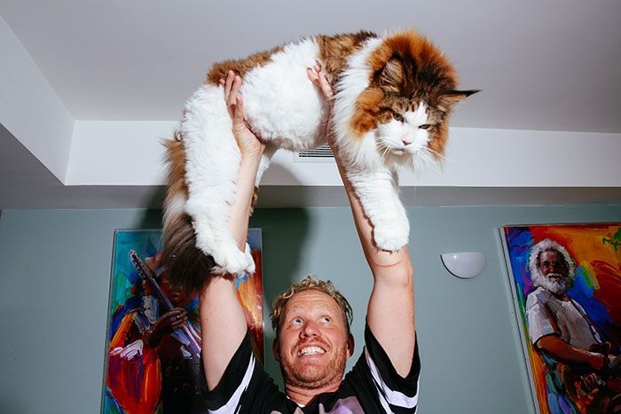 Самсон - самый крупный кот Нью-Йорка (9 фото)