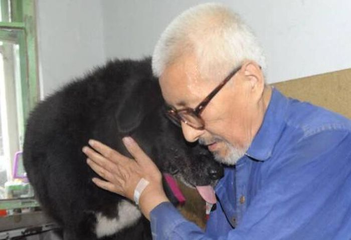 Пожилой китаец завещал все свои деньги собаке (3 фото)