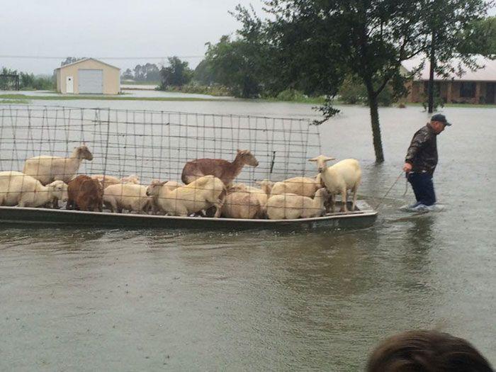 Животные, спасенные из зоны бедствия (8 фото)
