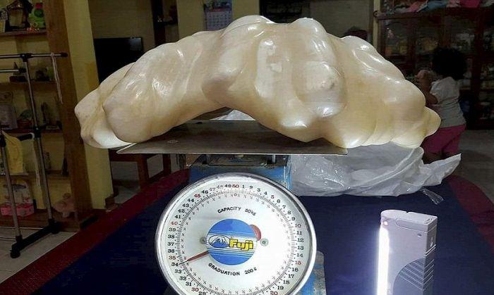 Филиппинский рыбак 10 лет скрывал самую большую жемчужину в мире (2 фото)