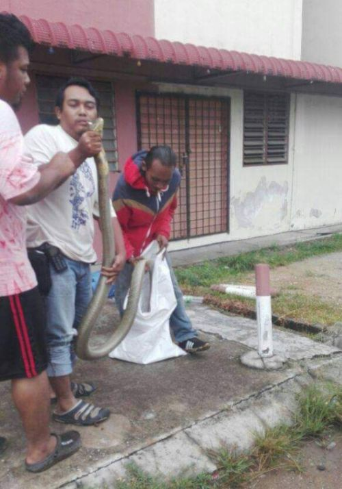 Типичная картина для жителей Малайзии (4 фото)