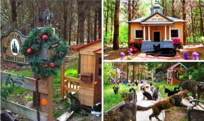 Оригинальные решения, облегчающие жизнь животных в современном мире (12 фото)