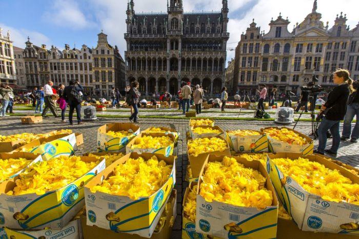 Цветочные ковры на центральной площади Брюсселя (9 фото)