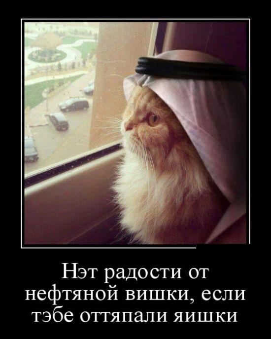 http://trinixy.ru/pics5/20160825/demotivatory_19.jpg