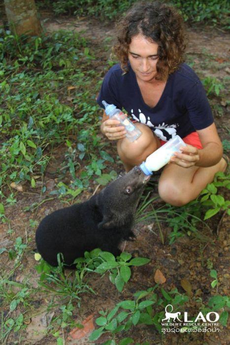 Спасение семимесячного медвежонка по кличке Сэмми (15 фото)