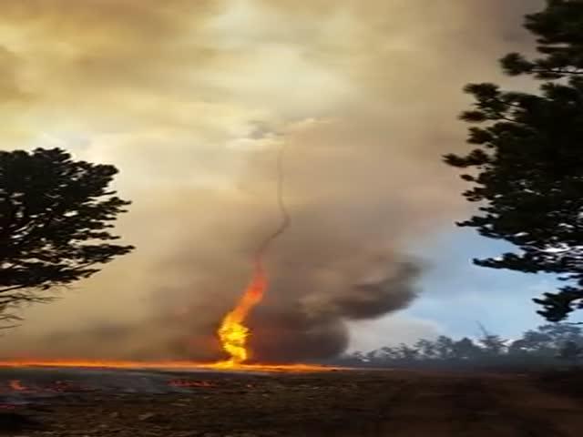 Огненный торнадо во время лесного пожара