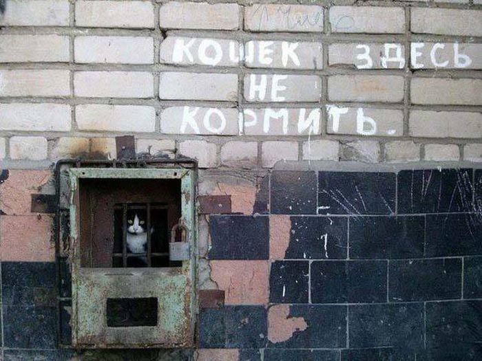Фото, которые возможно было сделать только в России. Часть 38 (46 фото)