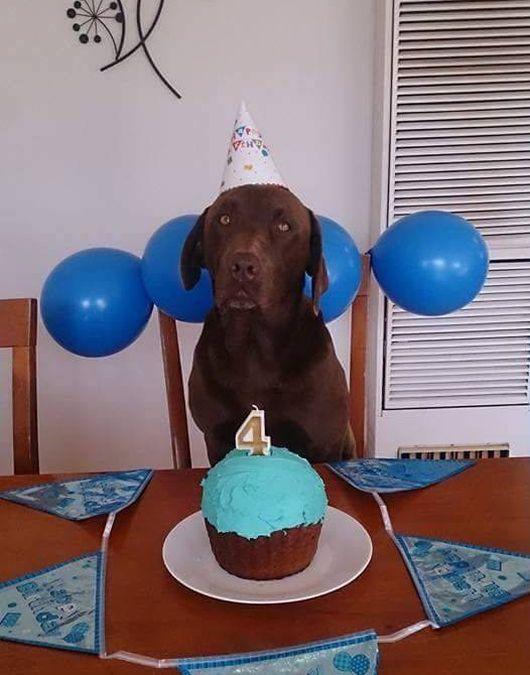 Терпеливый пес празднует свой День рождения (2 фото)