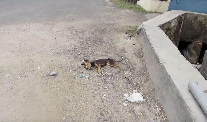 Спасение щенка (5 фото + видео)