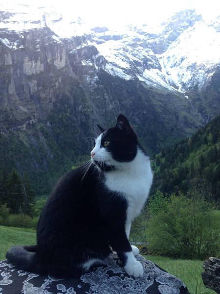 Кот-проводник указал путь заблудившемуся туристу (5 фото)