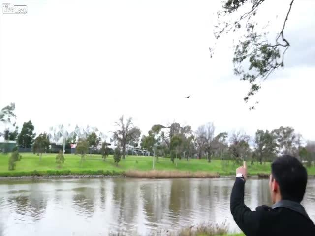 Птица сбросила змею на отдыхающих парка