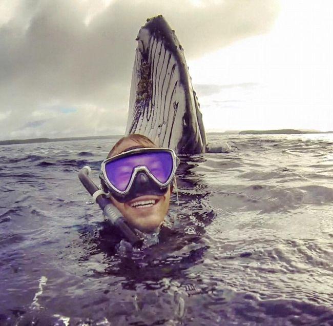 Парень сделал крутое селфи с горбатым китом (2 фото)