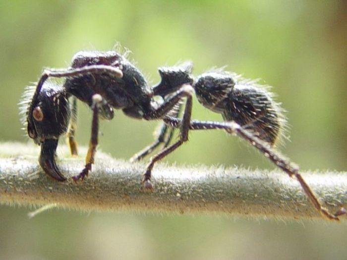 Энтомолог составил шкалу боли от укуса кусавших его насекомых (11 фото)
